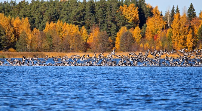 autumn-and-birds_finland
