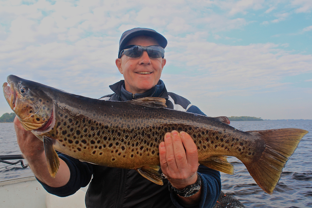 ireland_10_browntrout